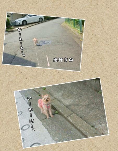 PhotoGrid_1444652089972.jpg