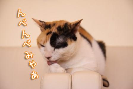 ミケヲ20150826-01