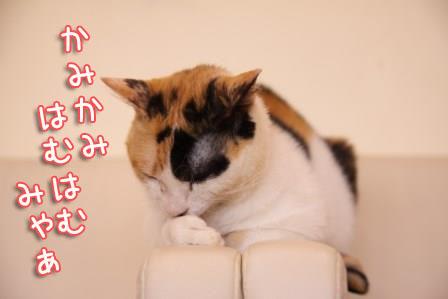 ミケヲ20150826-02