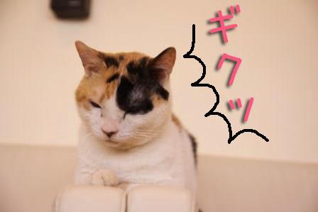 ミケヲ20150826-03