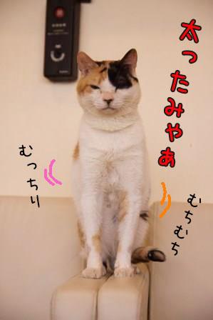 ミケヲ20150826-04