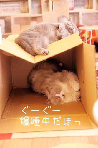 ぶりちゃん20151011-03