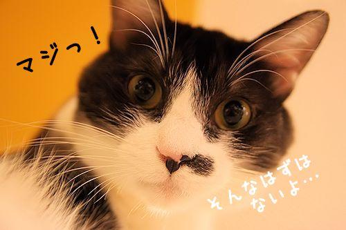 黒丸20151018-01