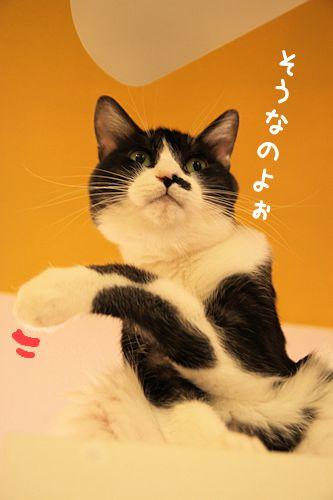 黒丸20151018-03