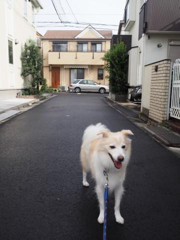 h27,9雨上がりの朝散歩