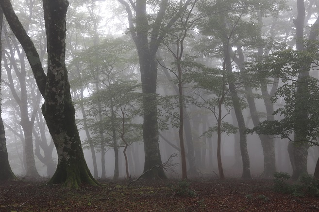 天城の森2