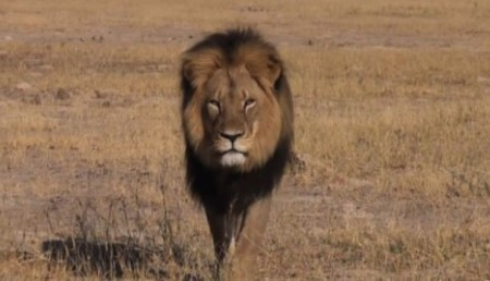 cecil-the-lion.jpg