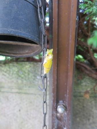 15912 枯れた蛹
