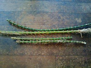 s-15921竹の根