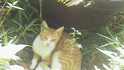 9月20日の猫