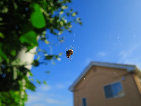15103 蜘蛛