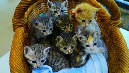 s-奇跡の7匹の子猫
