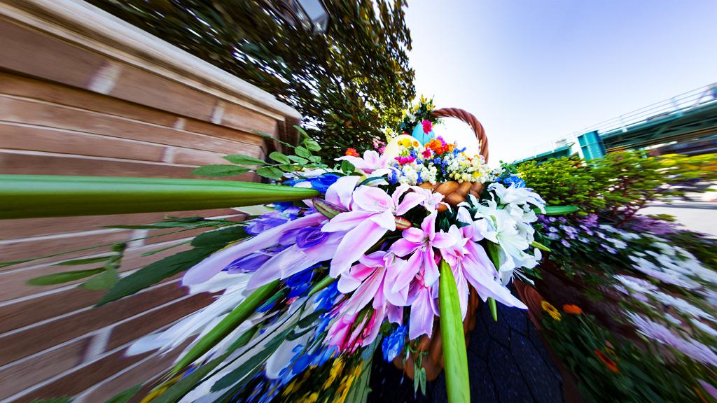 ウォーターフロントパークの花(アメリカンウォーターフロント)