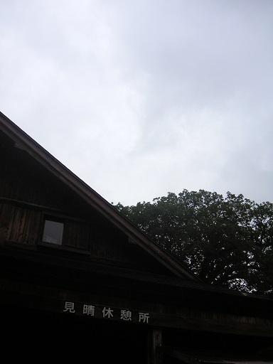 雨です・・