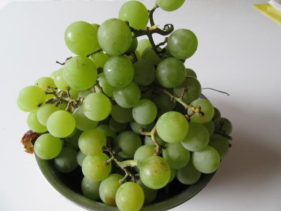 葡萄の収穫~2015