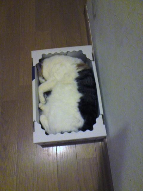 ピオーネの箱にみっしり詰まったねこ