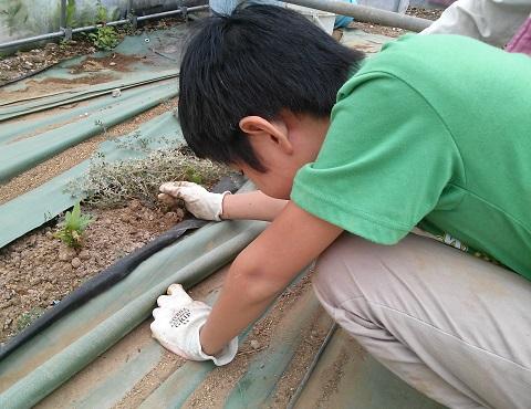 gardening534.jpg