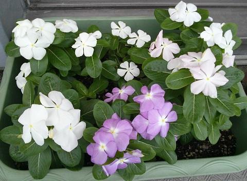 gardening538.jpg