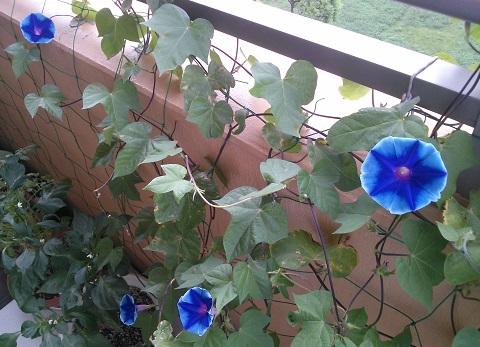 gardening539.jpg