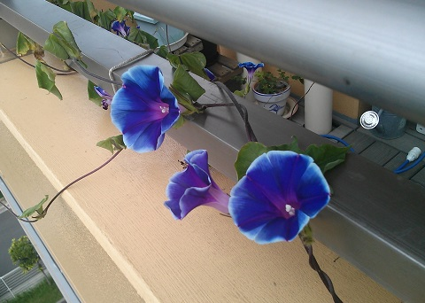 gardening541.jpg