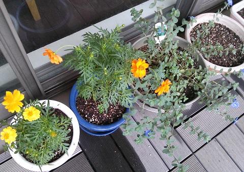 gardening556.jpg