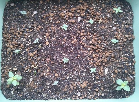 gardening565.jpg