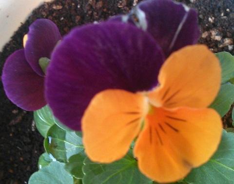 gardening573.jpg