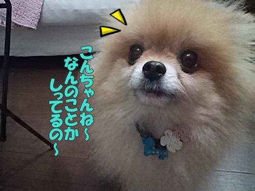 DSC_03840.jpg