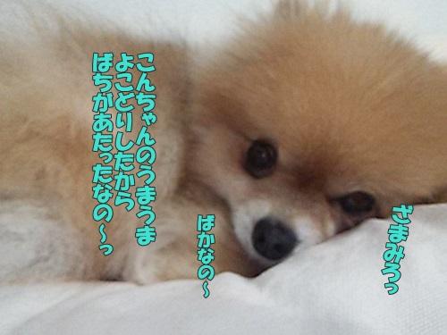 DSC_03890.jpg