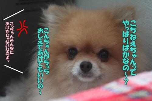 IMG_58460.jpg