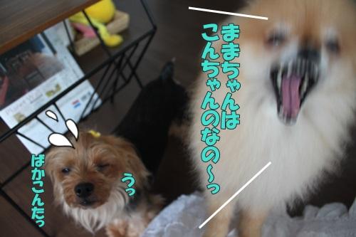 IMG_58720.jpg