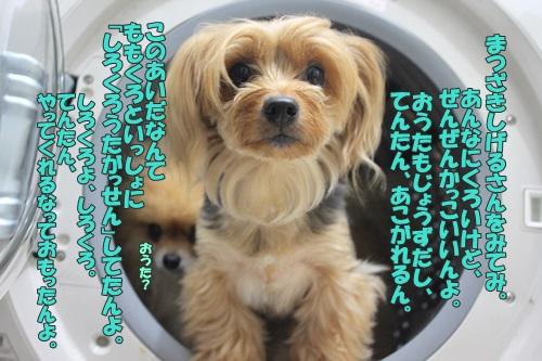 IMG_60340.jpg