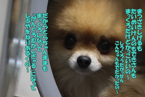 IMG_60410.jpg