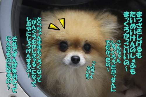 IMG_6048000.jpg
