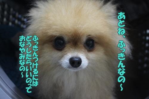 IMG_60580.jpg