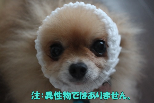 IMG_62050.jpg