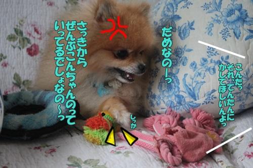 IMG_62210.jpg