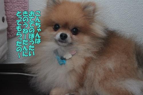 IMG_62950.jpg