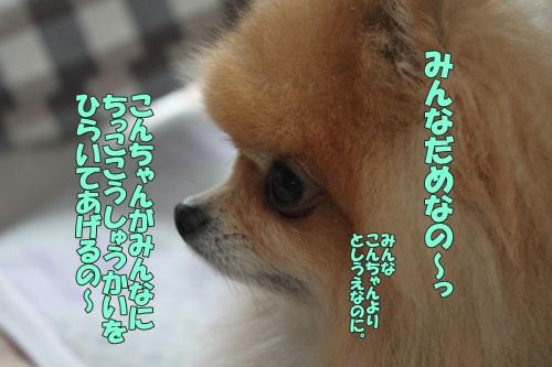 IMG_63120.jpg