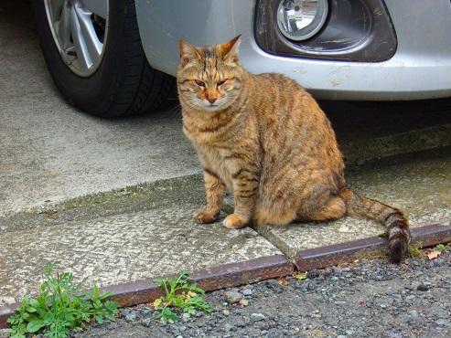 通りすがりに見かけた猫(754)
