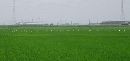小雨の田園風景
