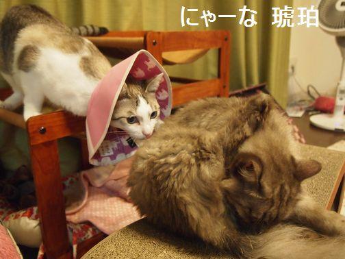 nya-nakohaku_20150830121114fa0.jpg