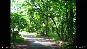 ぐんま昆虫の森 雑木林