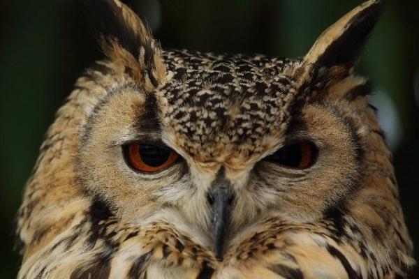 Owl_fukuro45674.jpg