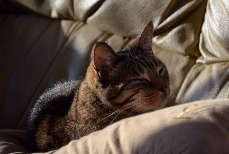 動物達も睡眠中に「夢」を見るのか?