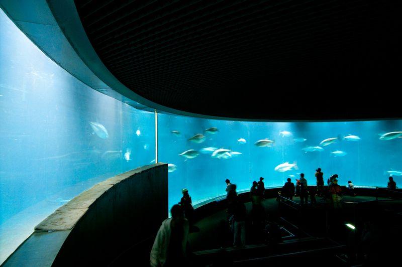 【葛西臨海水族園】マグロ大量死、いまだ原因不明…6月に追加した77匹と残り1匹、その後10匹が死亡