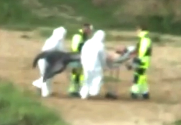 【動画】ポーランドの湖で「人魚?半魚人」のような生物を捕獲か…化学防護服を身につけた集団に湖から運ばれる