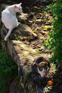 岡崎公園 公園猫