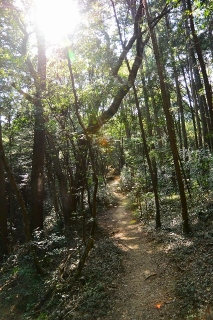岡崎中央総合公園 健康の森 冒険の小道