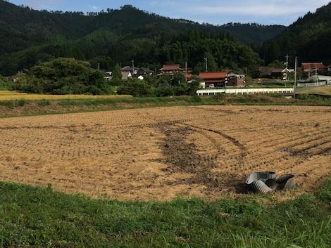 稲刈り20150916